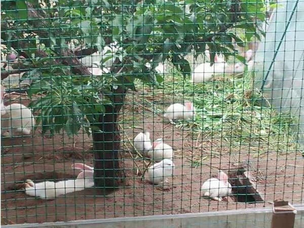 养殖护栏网